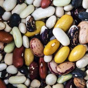 Vitamine del gruppo B: la vitamina B1 o tiamina è presente nei fagioli