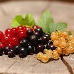 integratori naturali di vitamine ribes