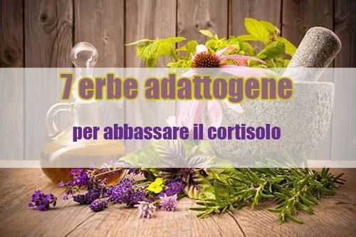Abbassare il cortisolo con le erbe adattogene