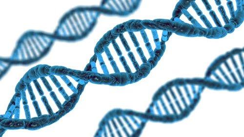 Per costruire il DNA gli enzimi proteici sono indispensabili.